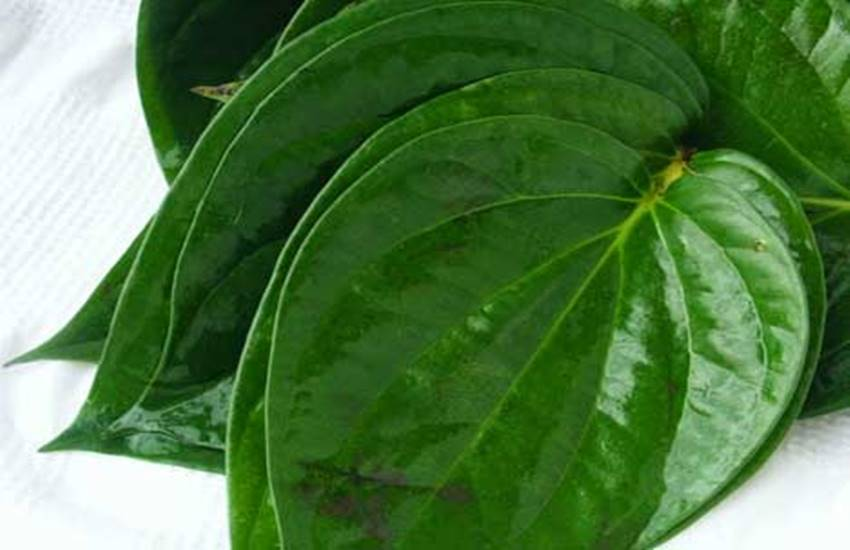 Betel Leaves, betel leaves uses, betel leaves uses for skin, betel leaf benefits for skin, how to use betel leaves for skin, paan ke patte, beauty benefits of betel leaves, paan leaves, beauty tips in hindi, acne remedies, glowing skin, lifestyle news in hindi, jansatta