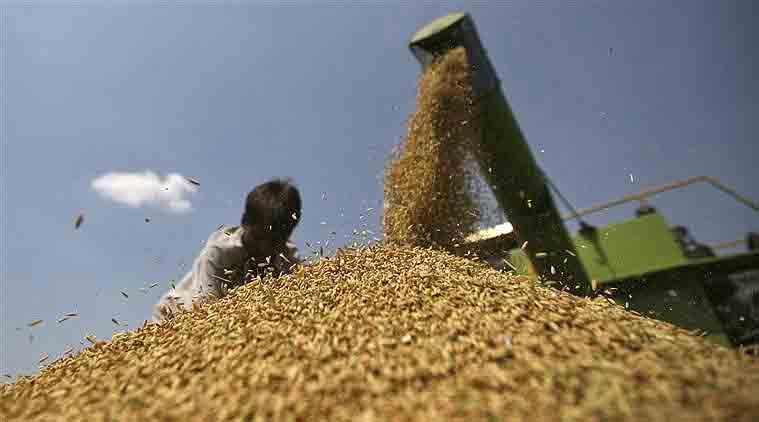 rice export scam, Rice Scam, Rs 1000 Crore, DRI, Business, CAG