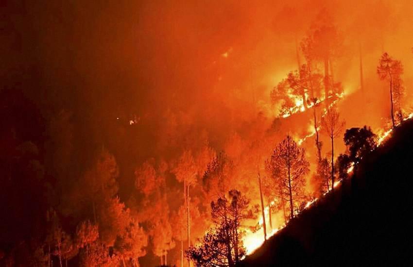 bio diversity, Uttarakhand, Uttarakhand Forest, Uttarakhand Forest fire