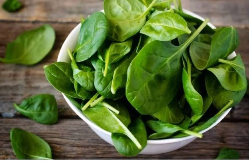 Spinach, spinach weight loss, how to reduce obesity, how to reduce obesity in hindi, benefits of spinach for weight loss in hindi, weight loss diet in hindi, weight loss tips in hindi, weight loss with spinach juice in hindi, weight loss recipes with spinach, health news, health news in hindi, lifestyle news in hindi, jansatta
