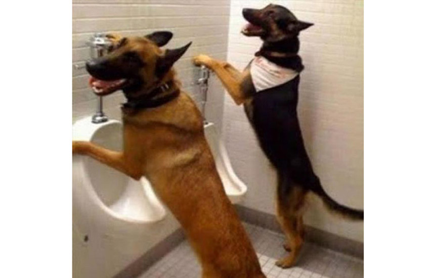 """funniest photos on social media, social media funniest photos, Social Media funny photos, Social Media funniest photos, funniest photos on Social Media, funniest photos social media pictures, funny pictures viral on social media, funny picturfunny photos on social media, funniest social media posts, funny social media es viral on Facebook, funny pictures viral on twitter, funny pictures viral on instagram, funny pictures viral on youtube, youtube funny videos, funniest photos ever, funniest photos ever on social media,funniest photos ever in the world, funny dogs photos,funny animals act photos, funny pigs photos, funny animal playing scene, funny animal riding & playing photos. funny activity,funny animal doing fun photos,latest photos, latest updates"""""""