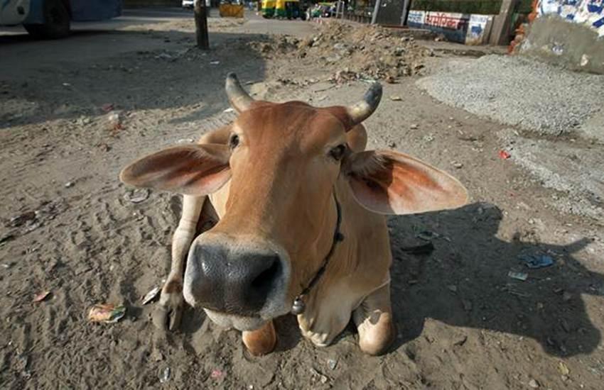 'Gau Rakshaks', Gau Rakshaks, Gate Money, Recovery, Highway, Villagers, Beat, Kanpur, UP, State News, Hindi News