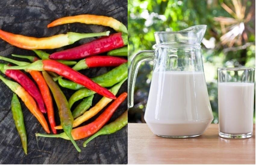 Food Adulteration, Food Safety and Standards Authority of India, FSSAI, Booklet, Detect Adulteration with Rapid Test, DART, Milk, Water, Detergent, Ghee, Starch, Chilly Powder, Dust, Coffee Powder, Clay, Green Vegetables, Die, Utility News, Hindi News