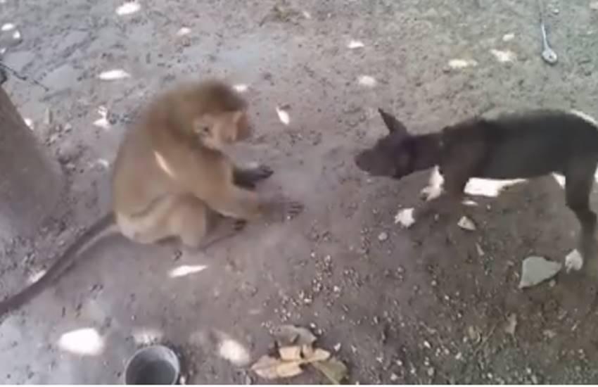 monkey, dog, food, fight
