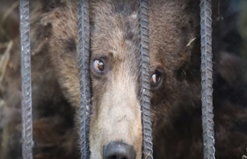 bear, prison, jail