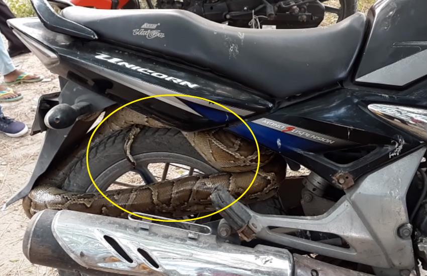 python in bike video, python curled up honda unicorn, python found in bike video, python curled up motorcycle, python video, amazing python video