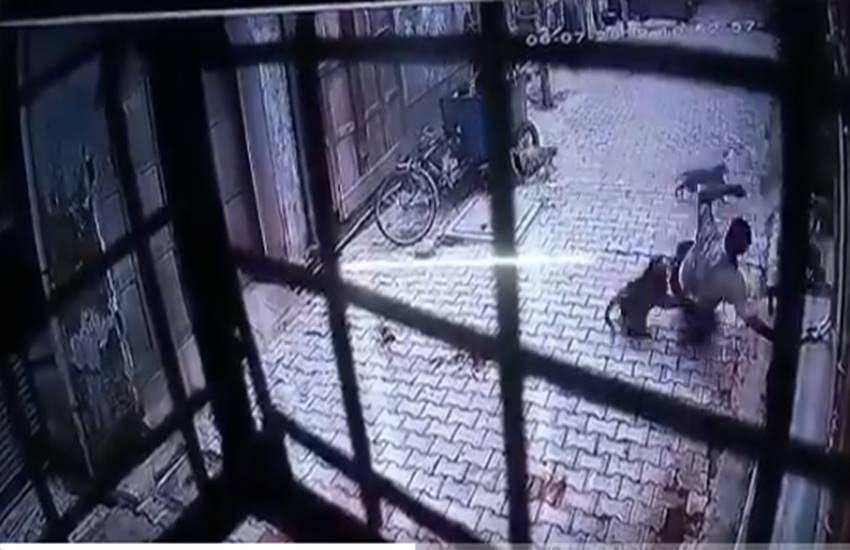 monkey attacked